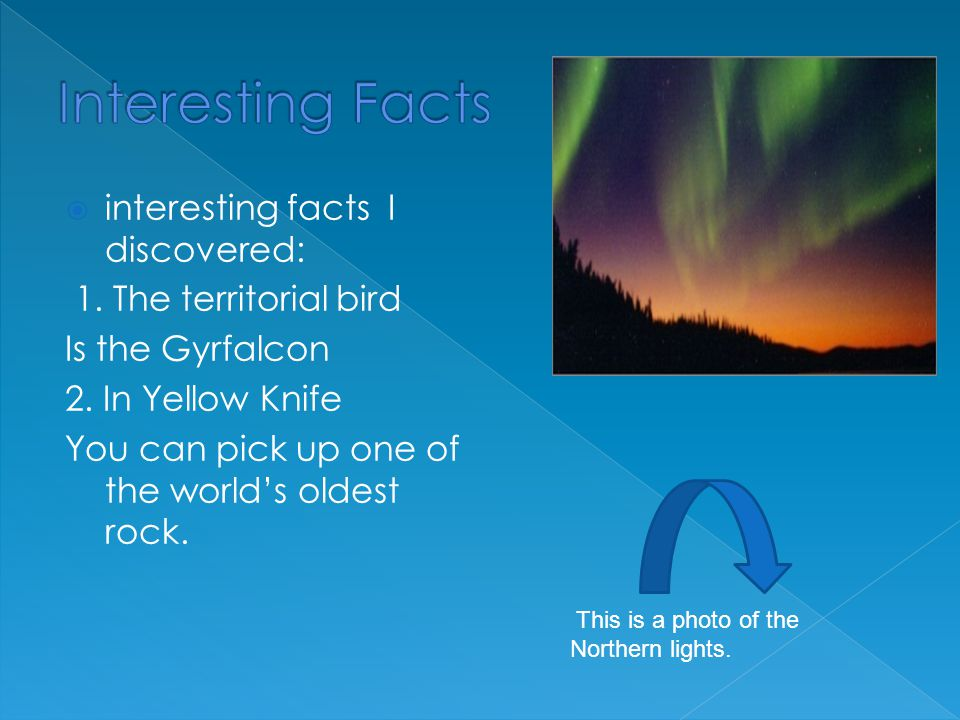  interesting facts I discovered: 1.The territorial bird Is the Gyrfalcon 2.