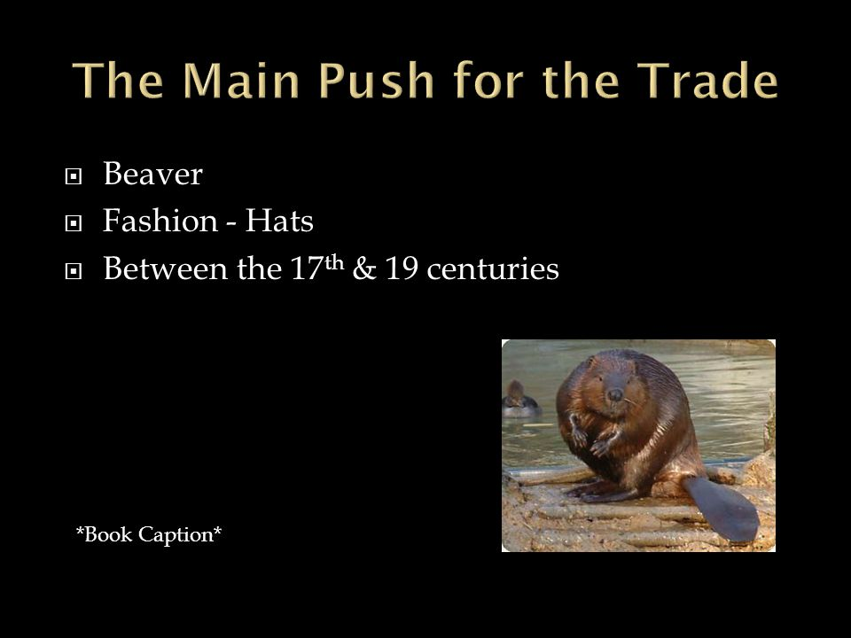  Beaver  Fashion - Hats  Between the 17 th & 19 centuries *Book Caption*