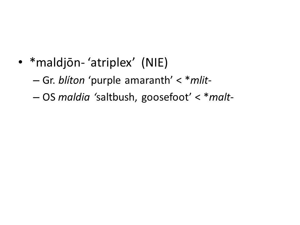 *maldjōn- 'atriplex' (NIE) – Gr. blíton 'purple amaranth' < *mlit- – OS maldia 'saltbush, goosefoot' < *malt-
