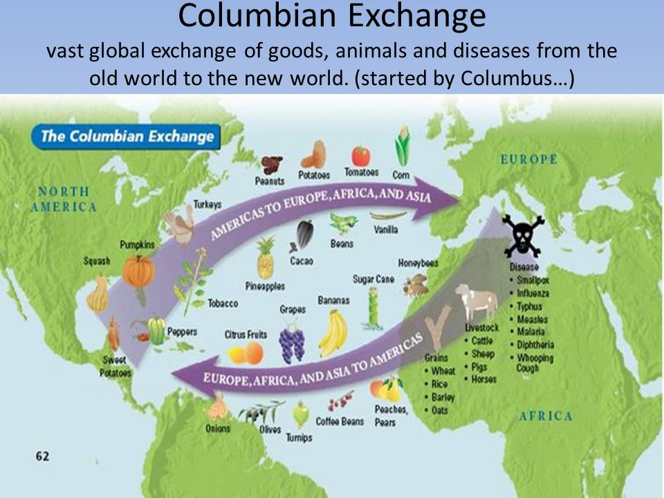 Columbian Exchange vast global exchange of goods, animals and diseases from the old world to the new world. (started by Columbus…)
