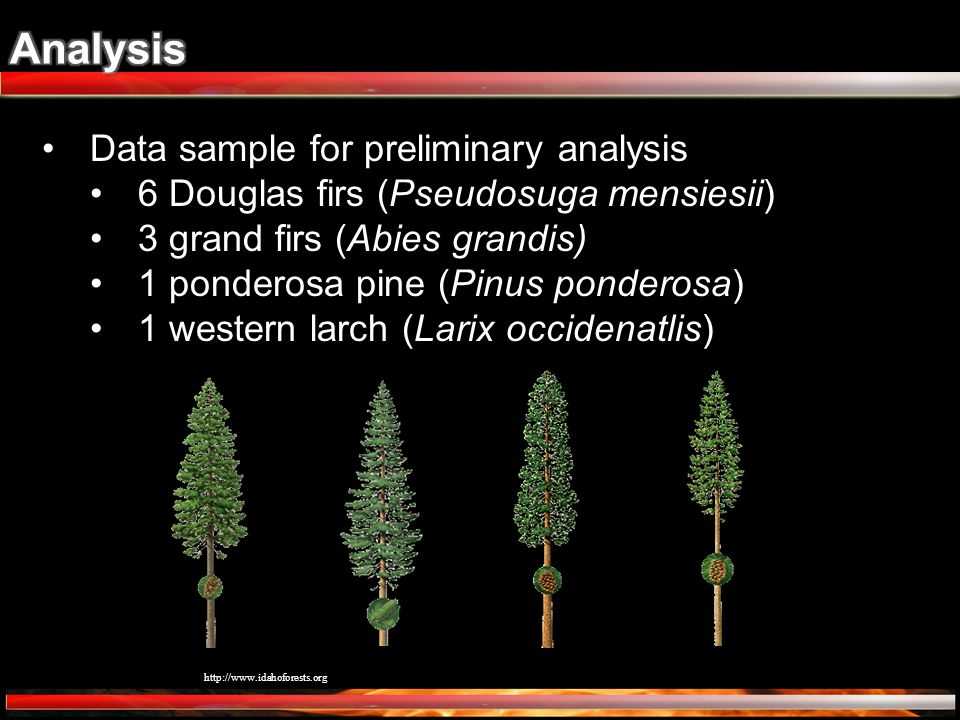 Data sample for preliminary analysis 6 Douglas firs (Pseudosuga mensiesii) 3 grand firs (Abies grandis) 1 ponderosa pine (Pinus ponderosa) 1 western l