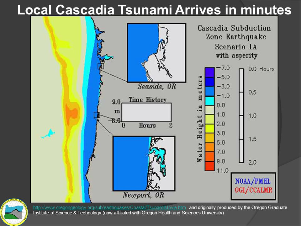 Animation from http://www.oregongeology.org/sub/earthquakes/Coastal/TsunamiMovie.htm and originally produced by the Oregon Graduate Institute of Science & Technology (now affiliated with Oregon Health and Sciences University) http://www.oregongeology.org/sub/earthquakes/Coastal/TsunamiMovie.htm Local Cascadia Tsunami Arrives in minutes