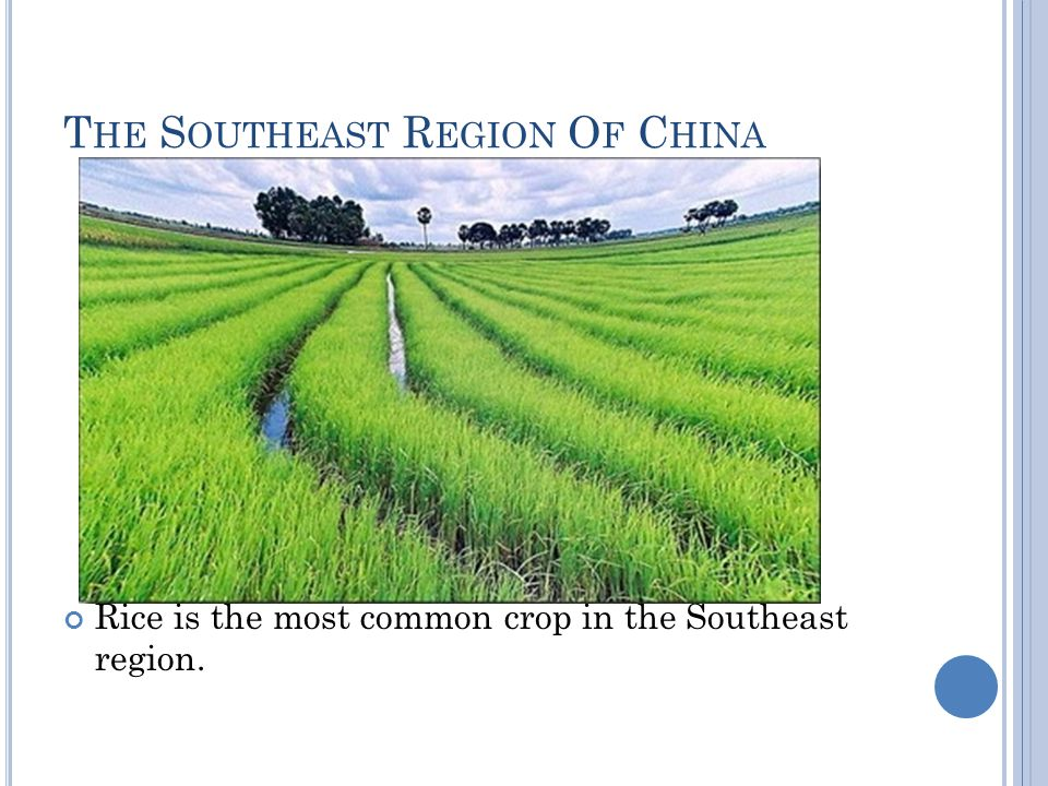 T HE S OUTHEAST R EGION O F C HINA Rice is the most common crop in the Southeast region.