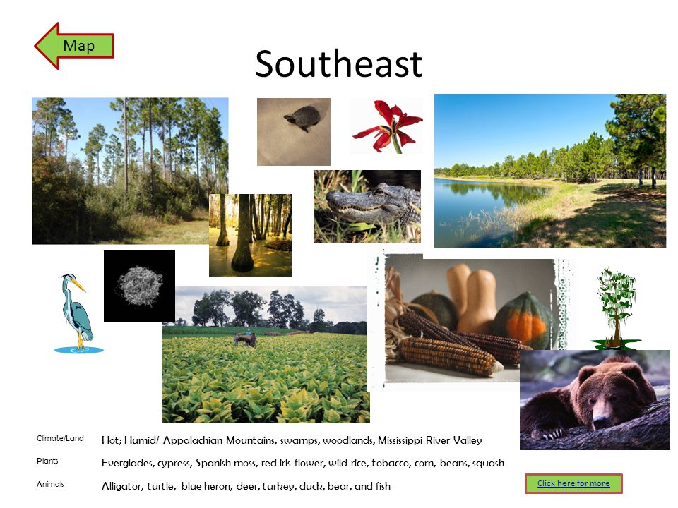 Southeast Climate/Land Hot; Humid/ Appalachian Mountains, swamps, woodlands, Mississippi River Valley Plants Everglades, cypress, Spanish moss, red ir