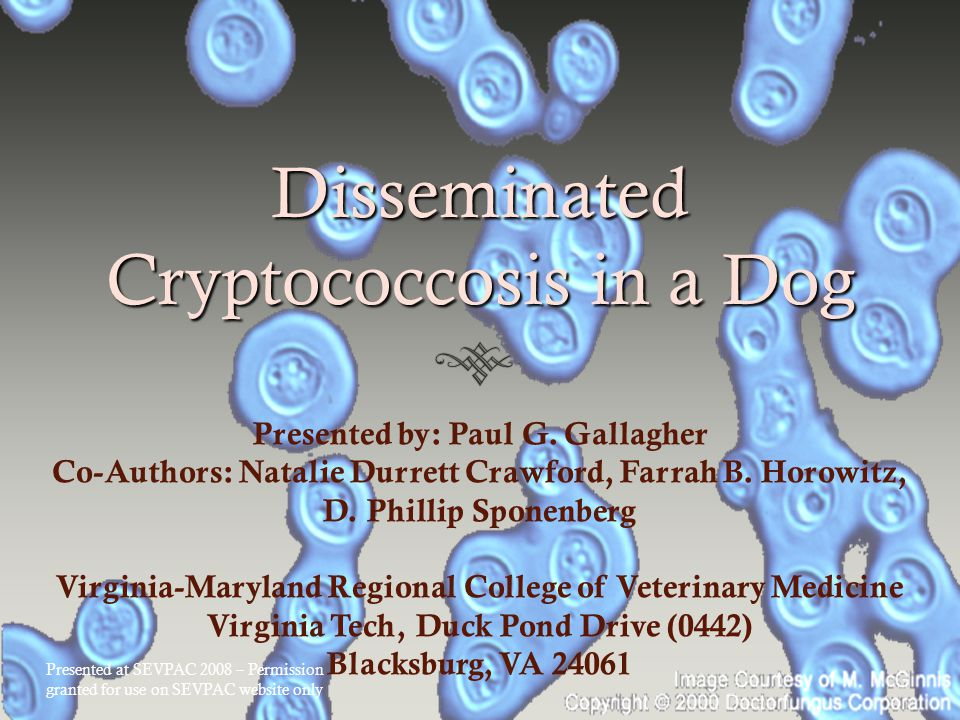Disseminated Cryptococcosis in a Dog Presented by: Paul G.