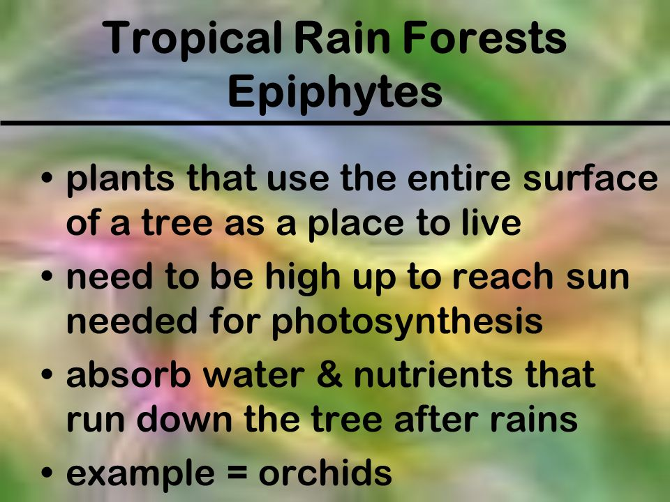 Tropical Rain Forests Epiphytes plants that use the entire surface of a tree as a place to live need to be high up to reach sun needed for photosynthe