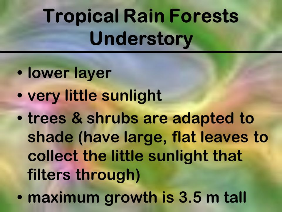 Tropical Rain Forests Understory lower layer very little sunlight trees & shrubs are adapted to shade (have large, flat leaves to collect the little s