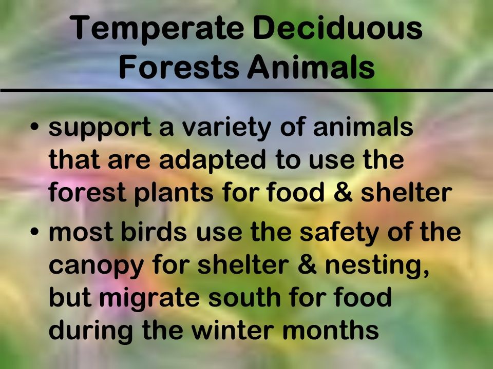 Temperate Deciduous Forests Animals support a variety of animals that are adapted to use the forest plants for food & shelter most birds use the safet