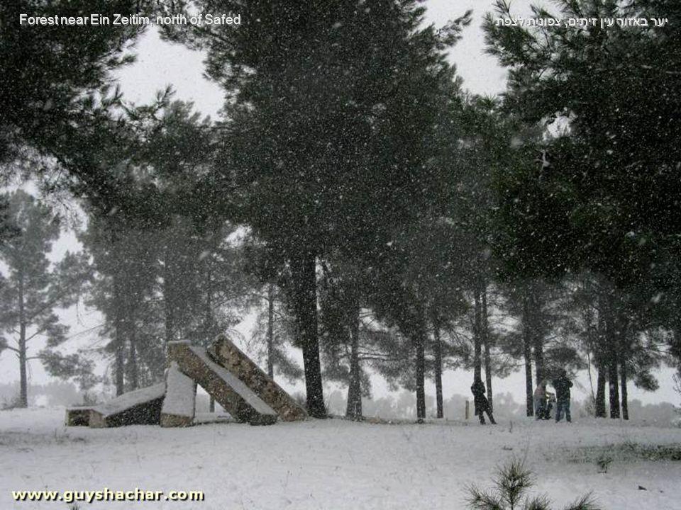 ועוד לחימום הקנה (והרגליים במכונית), מראות נוספים מדרכי הגליל המושלגות As an appetizer, here are some sights of the snowy Galilee roads