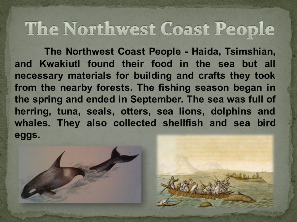 The Northwest Coast People - Haida, Tsimshian, and Kwakiutl found their food in the sea but all necessary materials for building and crafts they took from the nearby forests.