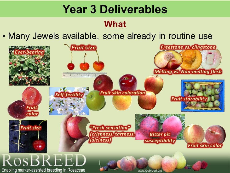 Year 3 Deliverables What Many Jewels available, some already in routine use