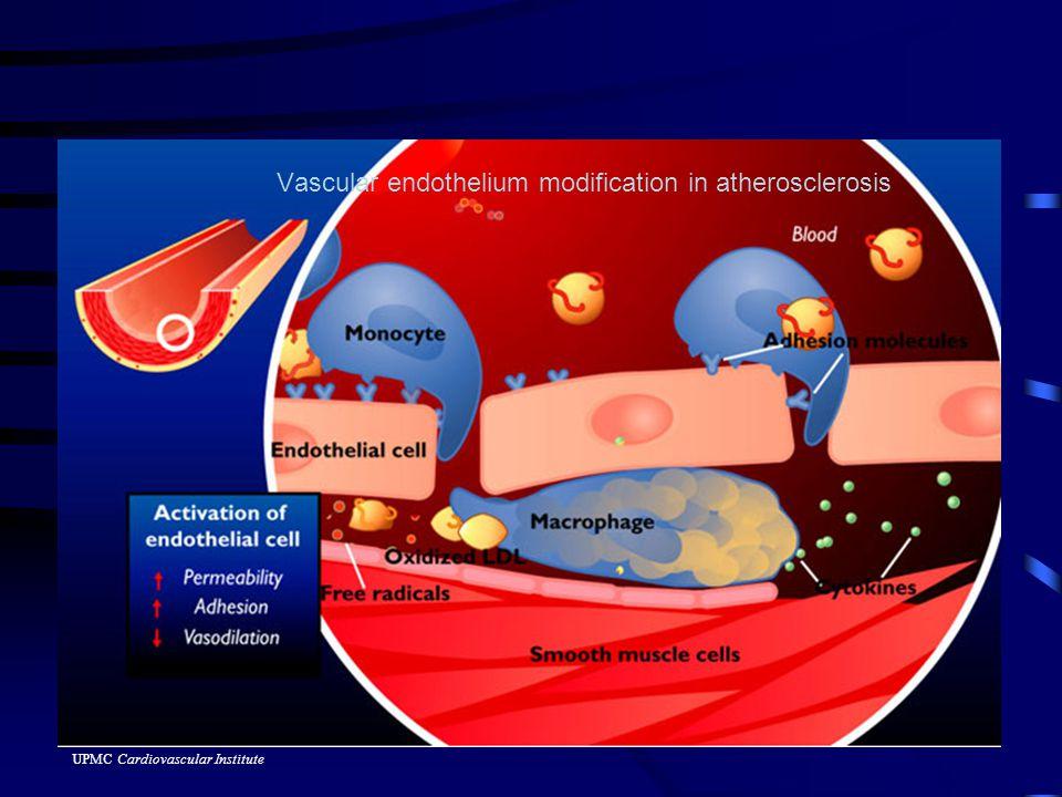 Vascular endothelium modification in atherosclerosis