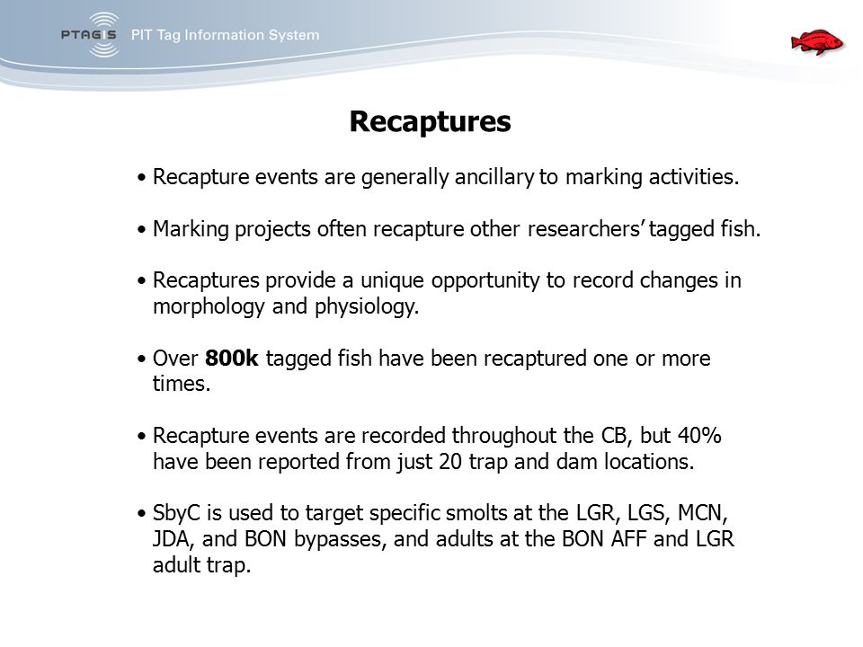 Recaptures Recapture events are generally ancillary to marking activities. Marking projects often recapture other researchers' tagged fish. Recaptures