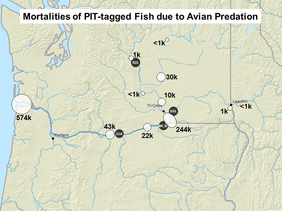 IHR MCN JDA RIS 30k 10k 244k 22k 574k Mortalities of PIT-tagged Fish due to Avian Predation <1k 43k 1k <1k 1k