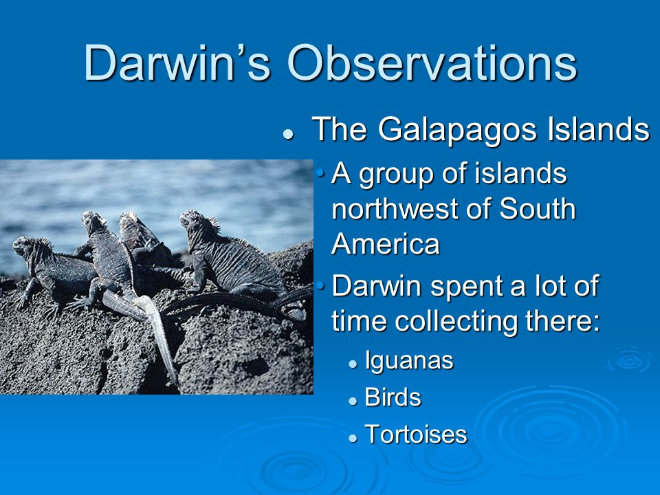 Darwin's Observations The Galapagos Islands A group of islands northwest of South America Darwin spent a lot of time collecting there: Iguanas Birds Tortoises