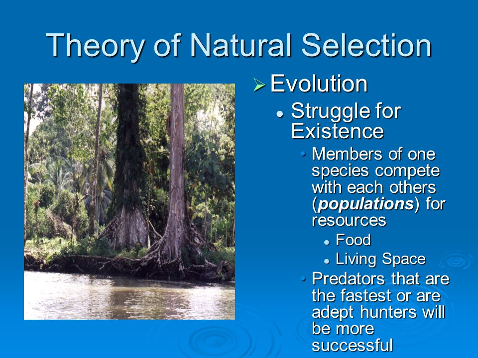 Theory of Natural Selection  Evolution Struggle for Existence Members of one species compete with each others (populations) for resources Food Living Space Predators that are the fastest or are adept hunters will be more successful