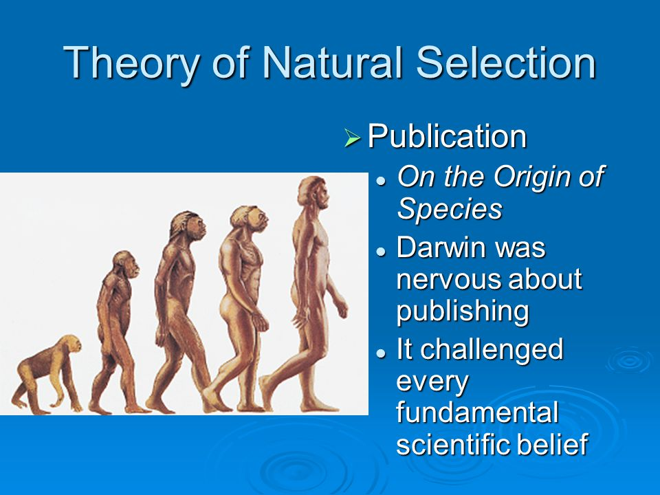 Theory of Natural Selection  Publication On the Origin of Species Darwin was nervous about publishing It challenged every fundamental scientific beli