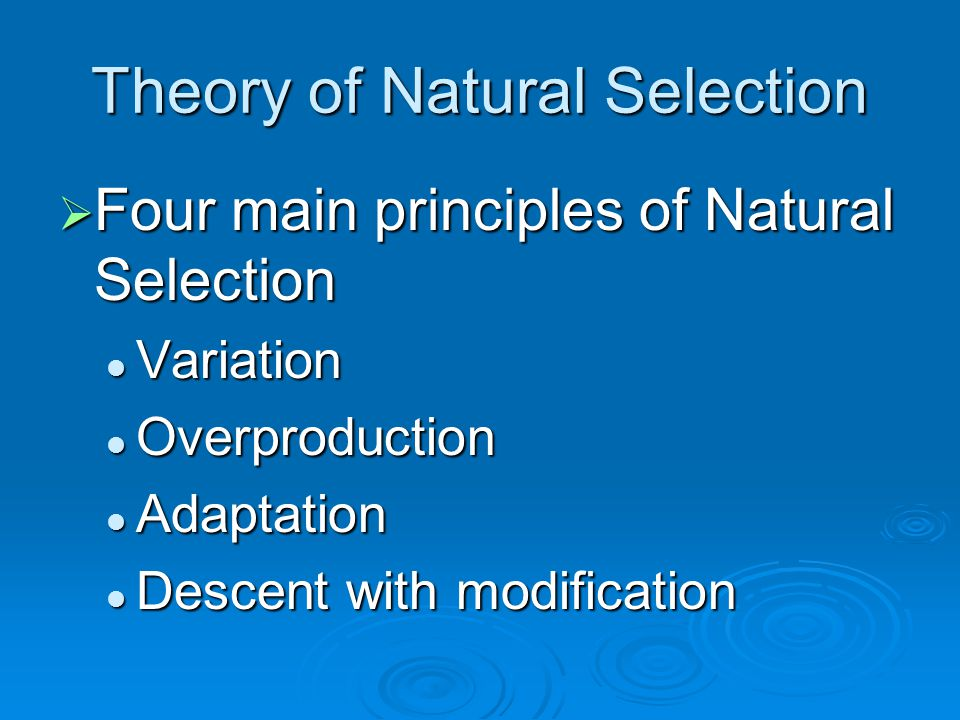 Theory of Natural Selection  Four main principles of Natural Selection Variation Variation Overproduction Overproduction Adaptation Adaptation Descent with modification Descent with modification