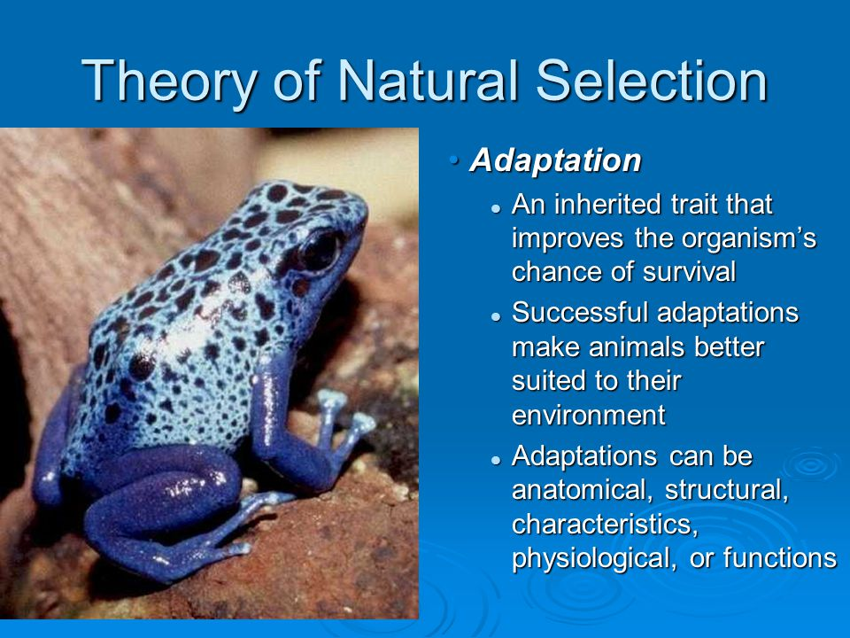Theory of Natural Selection Adaptation An inherited trait that improves the organism's chance of survival Successful adaptations make animals better suited to their environment Adaptations can be anatomical, structural, characteristics, physiological, or functions