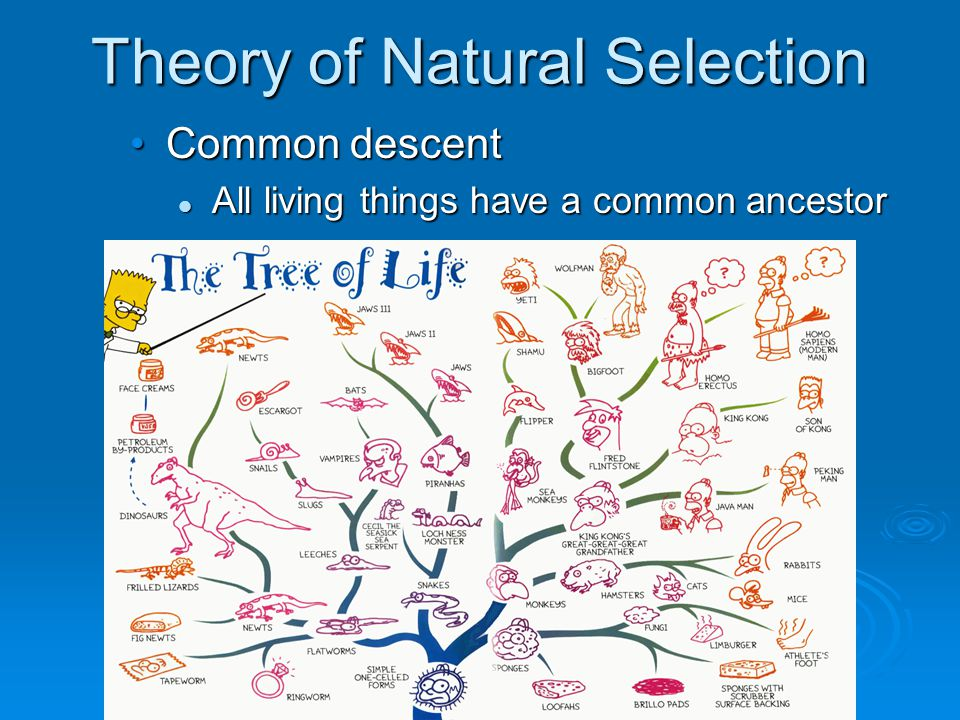 Theory of Natural Selection Common descent All living things have a common ancestor