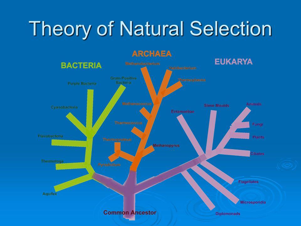 Theory of Natural Selection