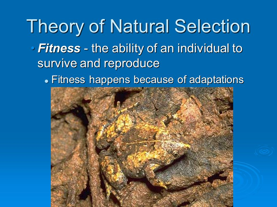 Fitness - the ability of an individual to survive and reproduce Fitness happens because of adaptations