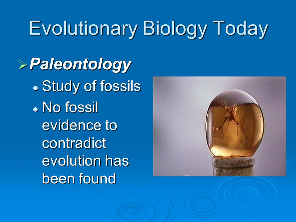 Evolutionary Biology Today  Paleontology Study of fossils Study of fossils No fossil evidence to contradict evolution has been found No fossil eviden