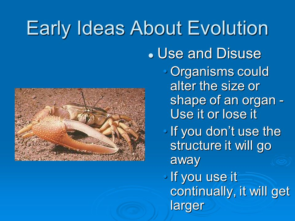 Early Ideas About Evolution Use and Disuse Organisms could alter the size or shape of an organ - Use it or lose it If you don't use the structure it will go away If you use it continually, it will get larger