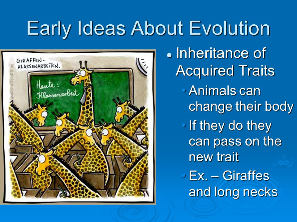 Early Ideas About Evolution Inheritance of Acquired Traits Animals can change their body If they do they can pass on the new trait Ex. – Giraffes and