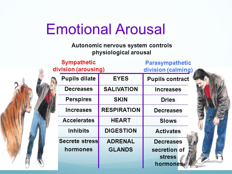 Emotional Arousal Autonomic nervous system controls physiological arousal Sympathetic division (arousing) Pupils dilate Decreases Perspires Increases