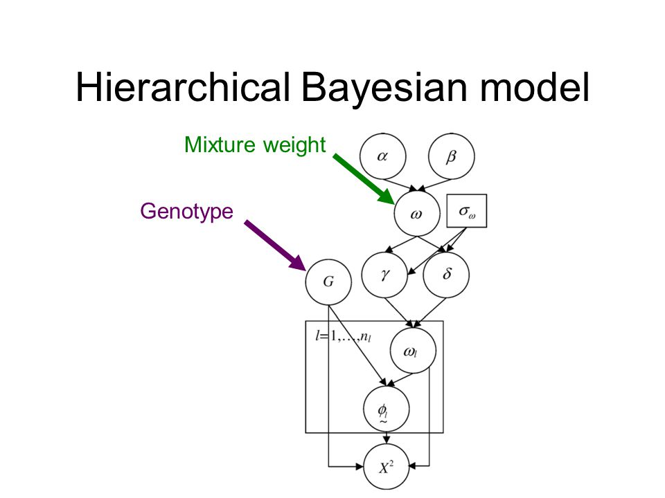 Hierarchical Bayesian model Mixture weight Genotype