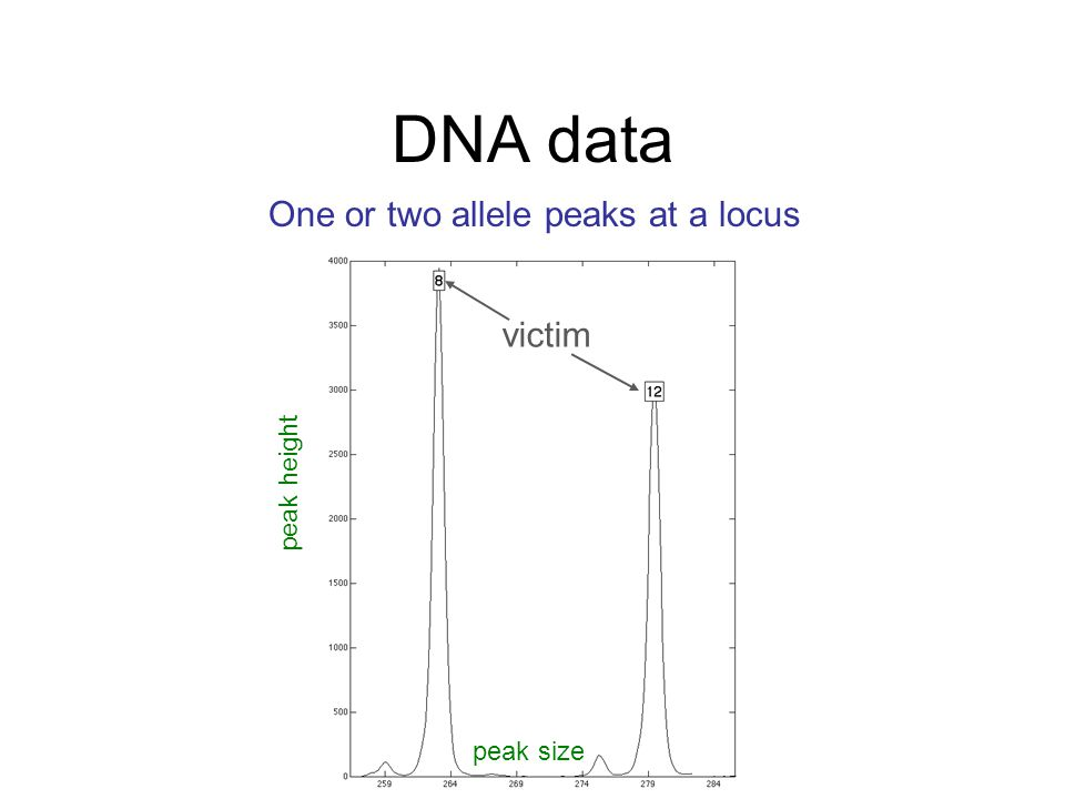 One or two allele peaks at a locus peak size peak height DNA data victim