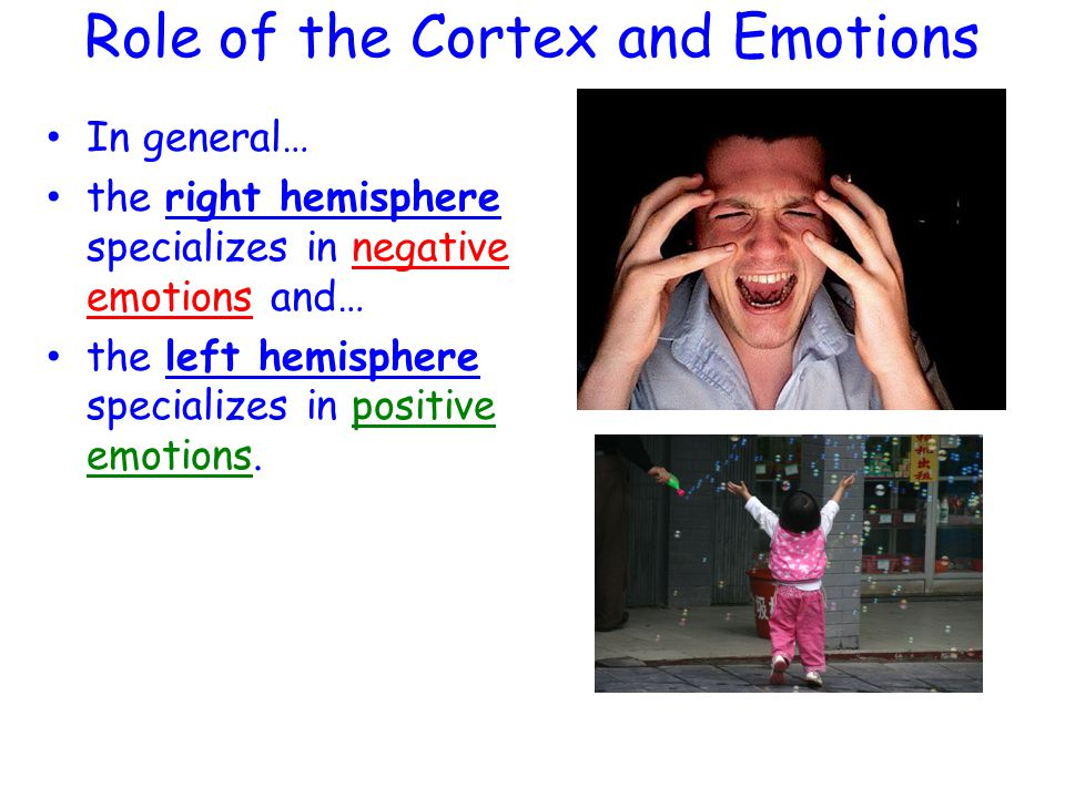 Role of the Cortex and Emotions In general… the right hemisphere specializes in negative emotions and… the left hemisphere specializes in positive emotions.