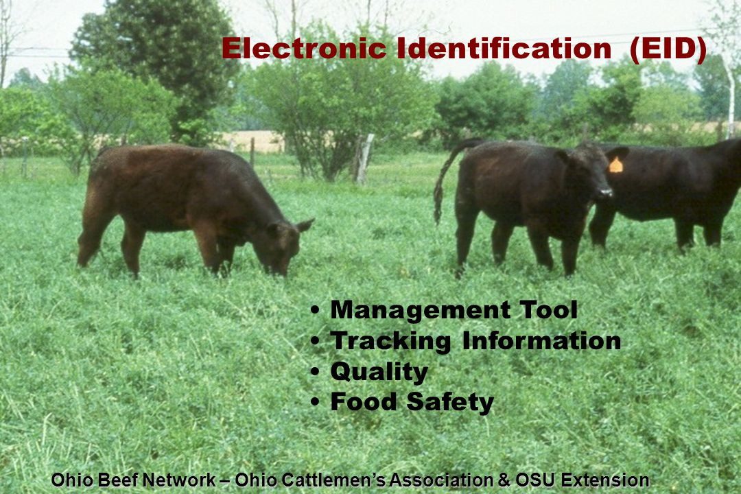 Electronic Identification (EID) Management Tool Tracking Information Quality Food Safety Ohio Beef Network – Ohio Cattlemen's Association & OSU Extension