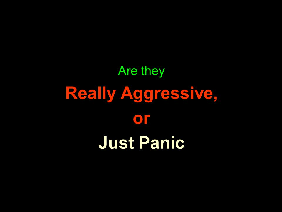 Are they Really Aggressive, or Just Panic