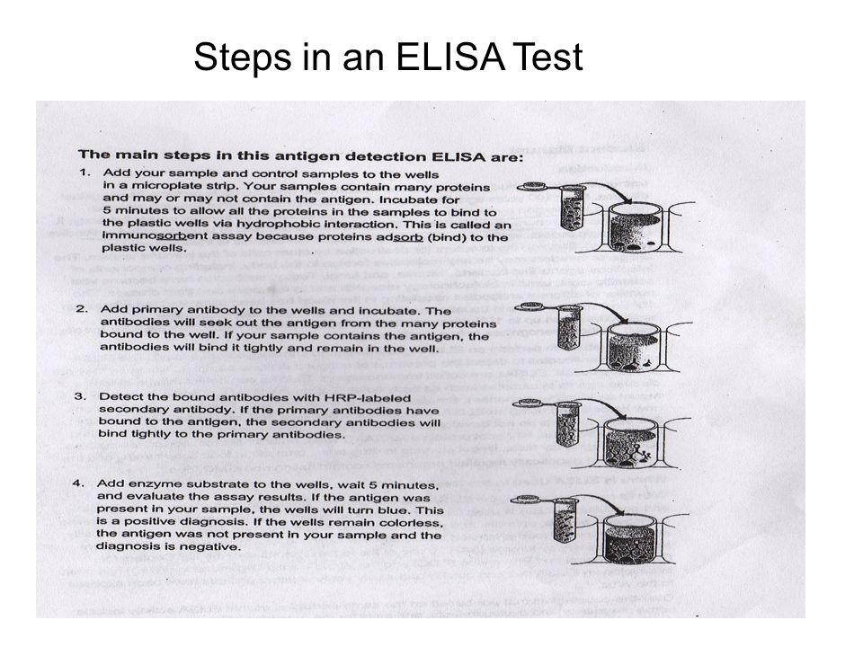 Steps in an ELISA Test