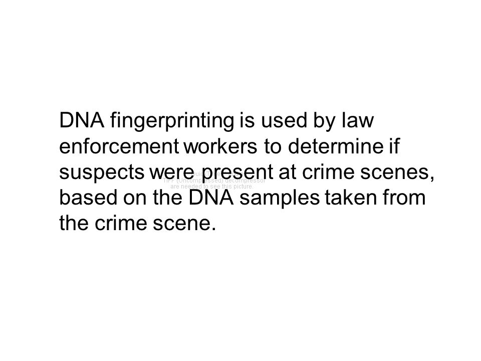 DNA fingerprinting is used by law enforcement workers to determine if suspects were present at crime scenes, based on the DNA samples taken from the c