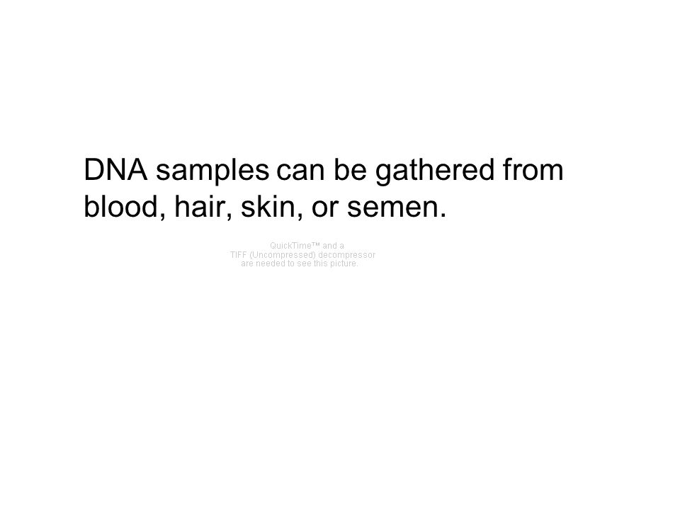 DNA samples can be gathered from blood, hair, skin, or semen.