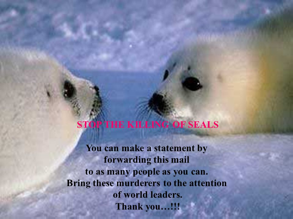 STOP THE KILLING OF SEALS You can make a statement by forwarding this mail to as many people as you can.