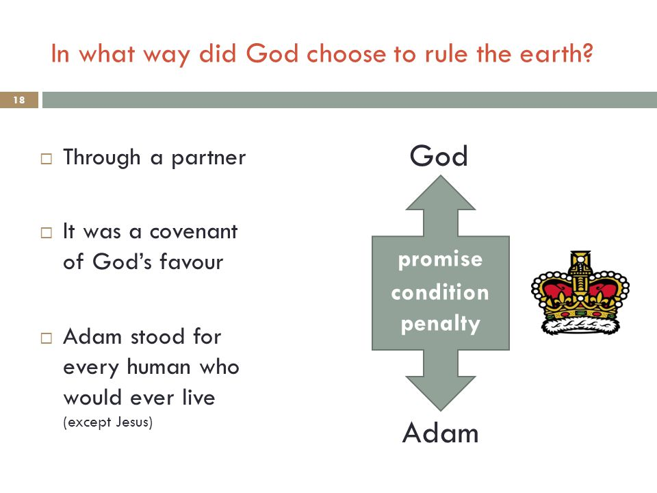 To learn about God's special friendship with Adam To learn about how that friendship affects us all To preview God's big plan of amazing grace Aim of lesson: 17