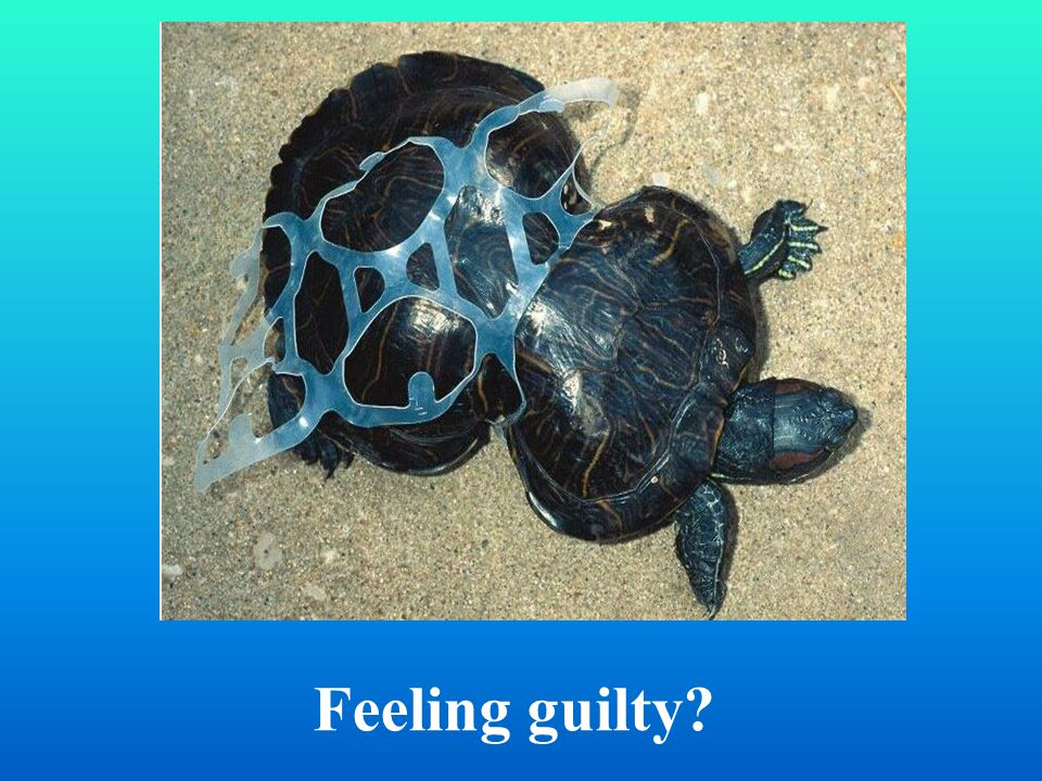 Feeling guilty?