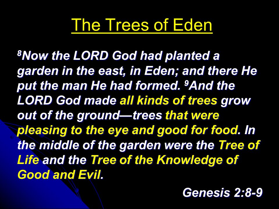 The Trees of Eden 8 Now the LORD God had planted a garden in the east, in Eden; and there He put the man He had formed.