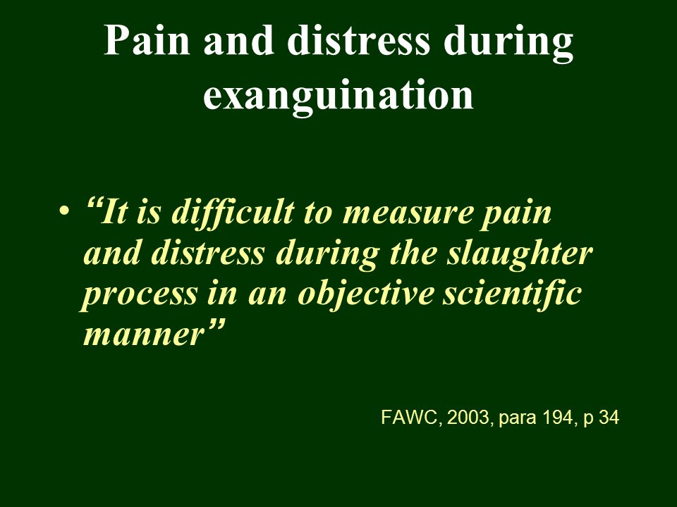 "Pain and distress during exanguination "" It is difficult to measure pain and distress during the slaughter process in an objective scientific manner """