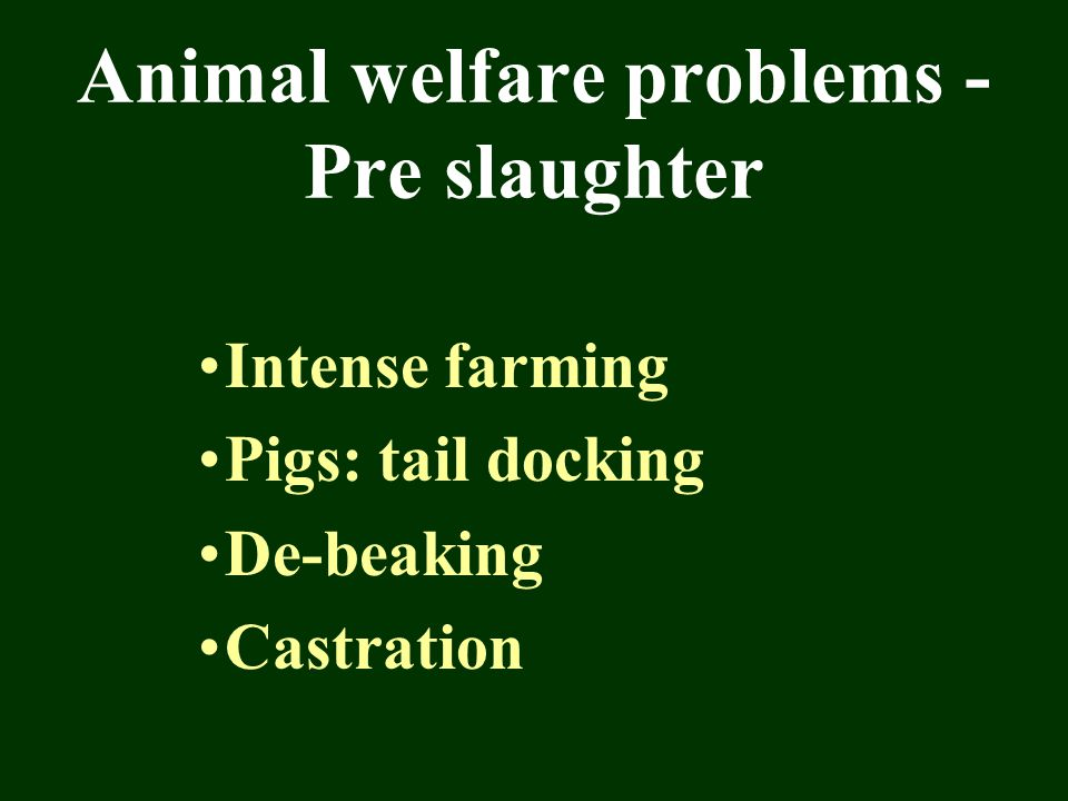 Animal welfare problems - Pre slaughter Intense farming Pigs: tail docking De-beaking Castration