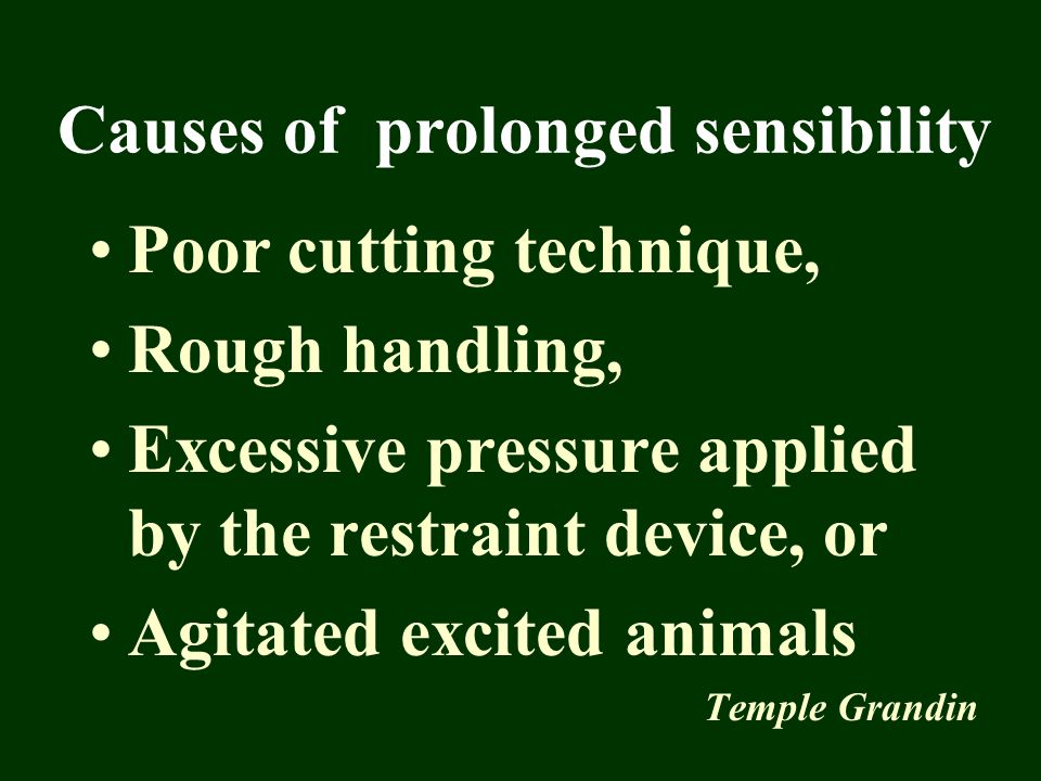Causes of prolonged sensibility Poor cutting technique, Rough handling, Excessive pressure applied by the restraint device, or Agitated excited animal