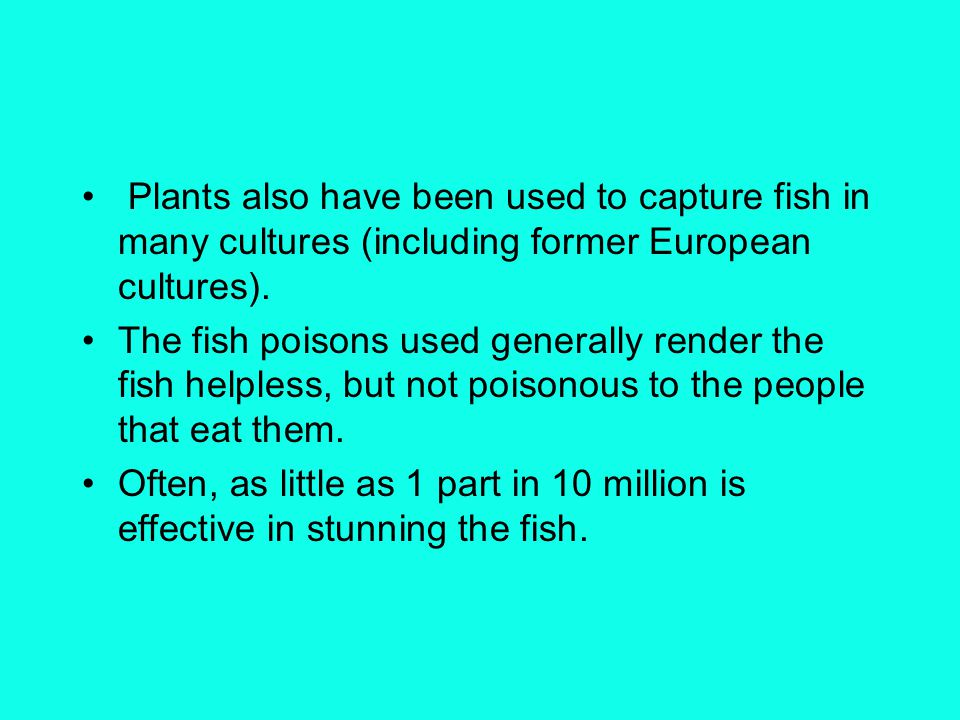Plants also have been used to capture fish in many cultures (including former European cultures). The fish poisons used generally render the fish help