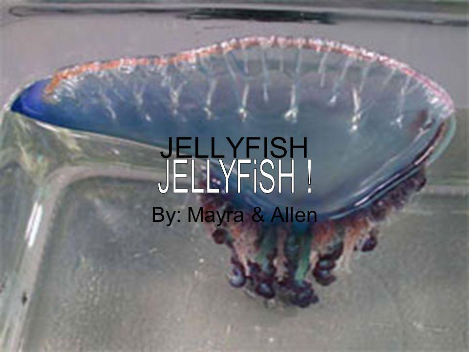 JELLYFISH By: Mayra & Allen