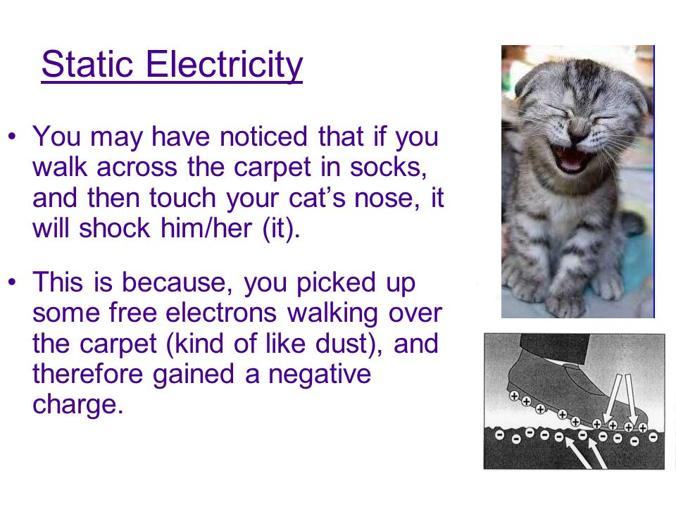 Static Electricity You may have noticed that if you walk across the carpet in socks, and then touch your cat's nose, it will shock him/her (it). This
