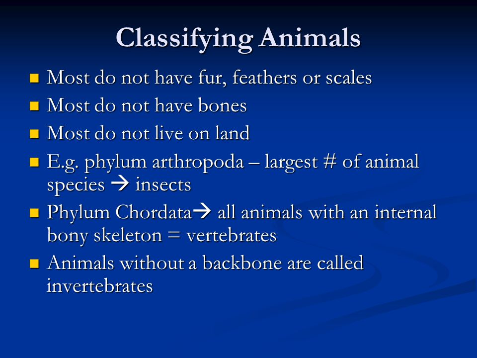 Classifying Animals Most do not have fur, feathers or scales Most do not have fur, feathers or scales Most do not have bones Most do not have bones Most do not live on land Most do not live on land E.g.