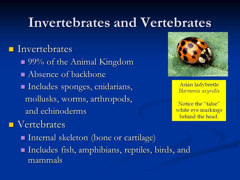 Invertebrate Animals I Sponges Sponges Cnidarians Cnidarians Worms Worms Mollusks Mollusks Arthropods Arthropods Echinoderms Echinoderms Colony of sponges Chambered Nautilus